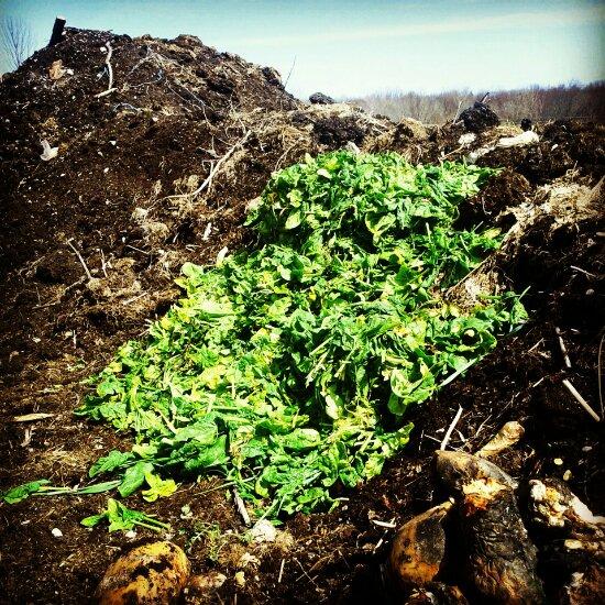 Weeded greens