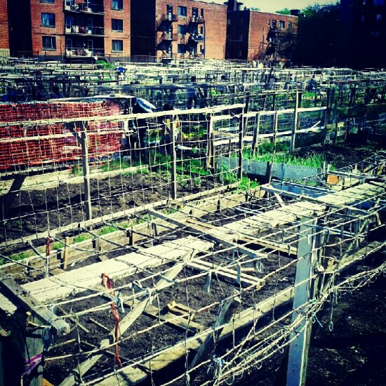 Community garden in Montreal