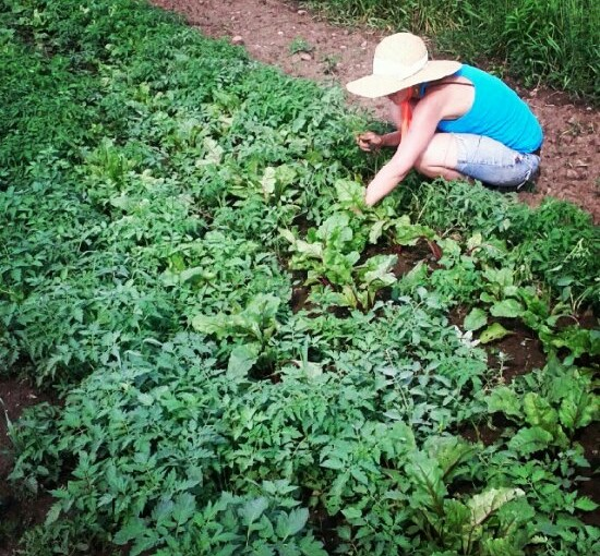 Your basic hand weeding