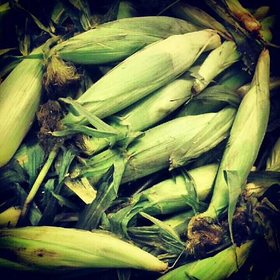 Early sweet corn