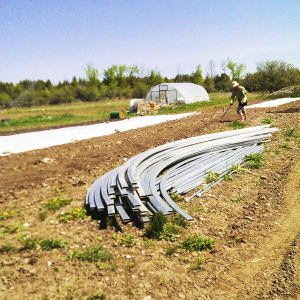 Bed preparation and hoophouse steel