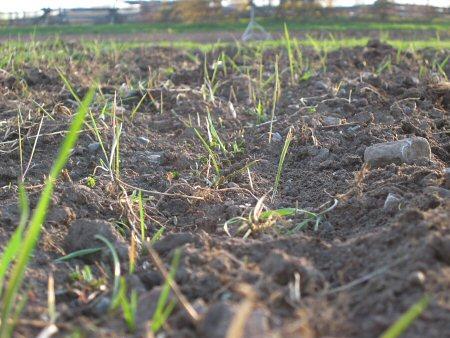 Grass…