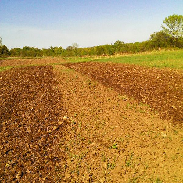 Tilling squash patch