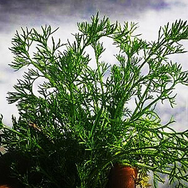 Weed ID app photo